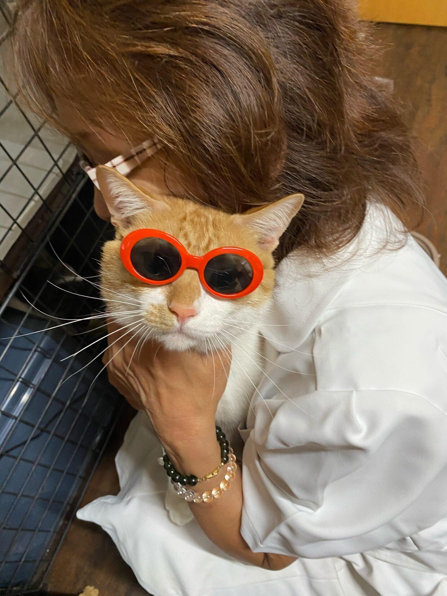 ユーミンの店猫